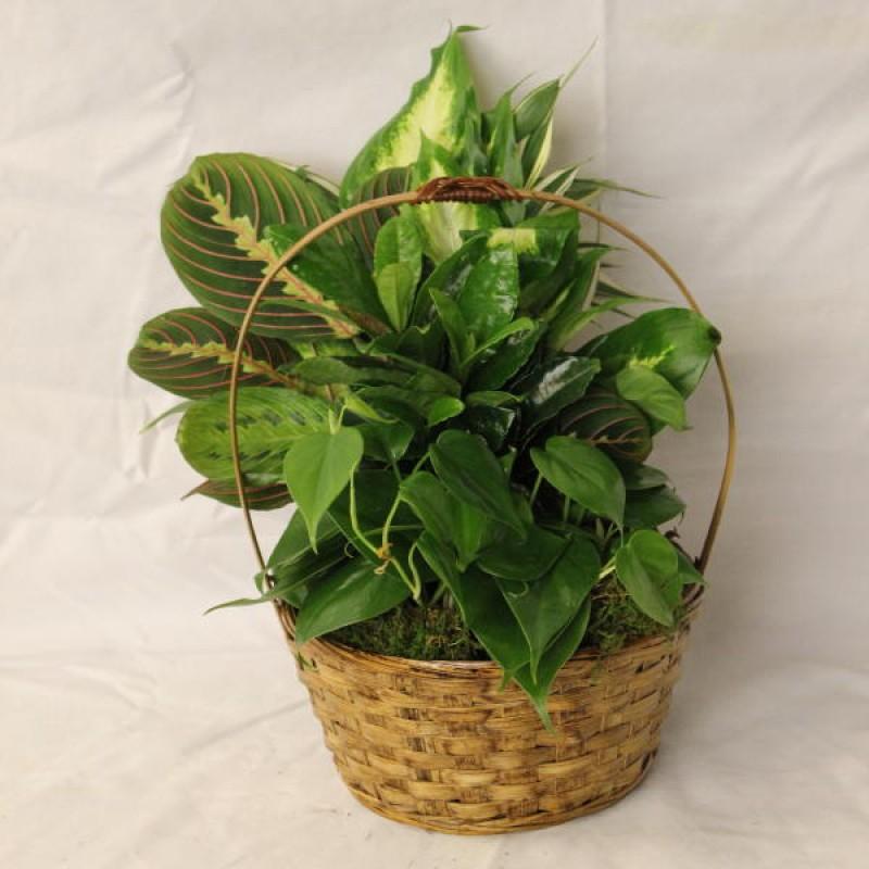 Green Garden EB-620