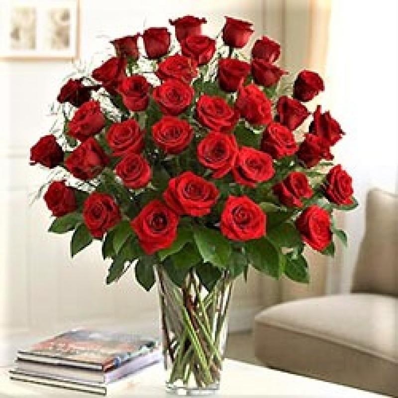 3Dz premium long stem roses EB-581