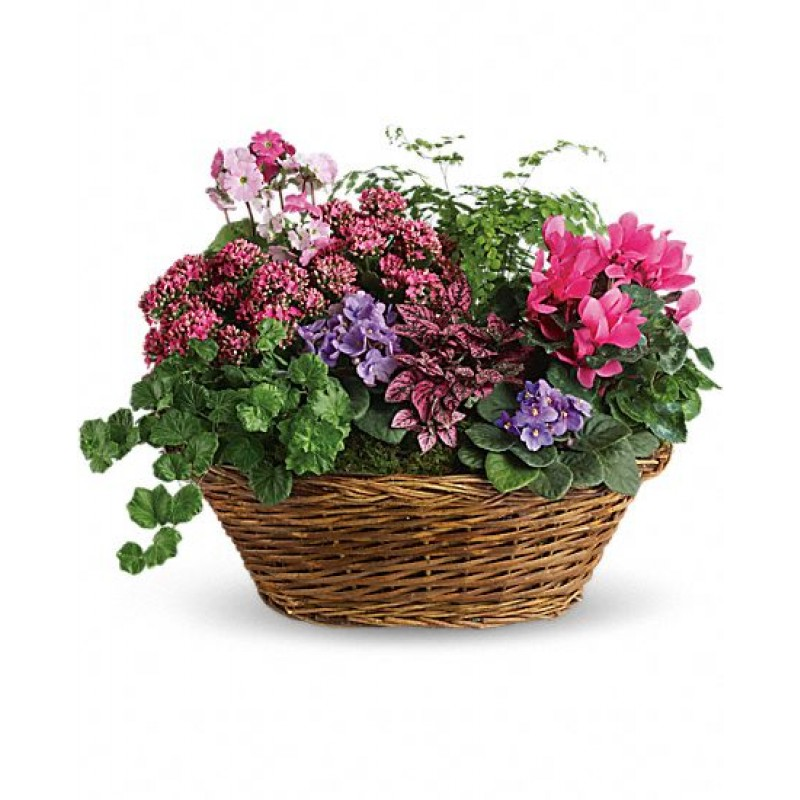 Bloomer basket EB-513