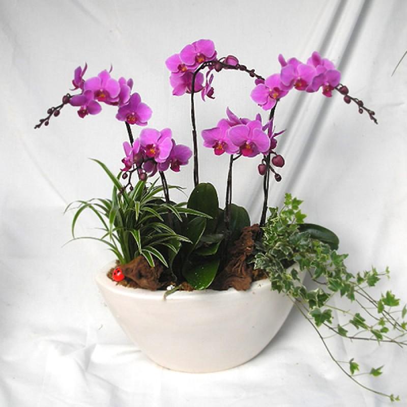 Orchid garden EB-227