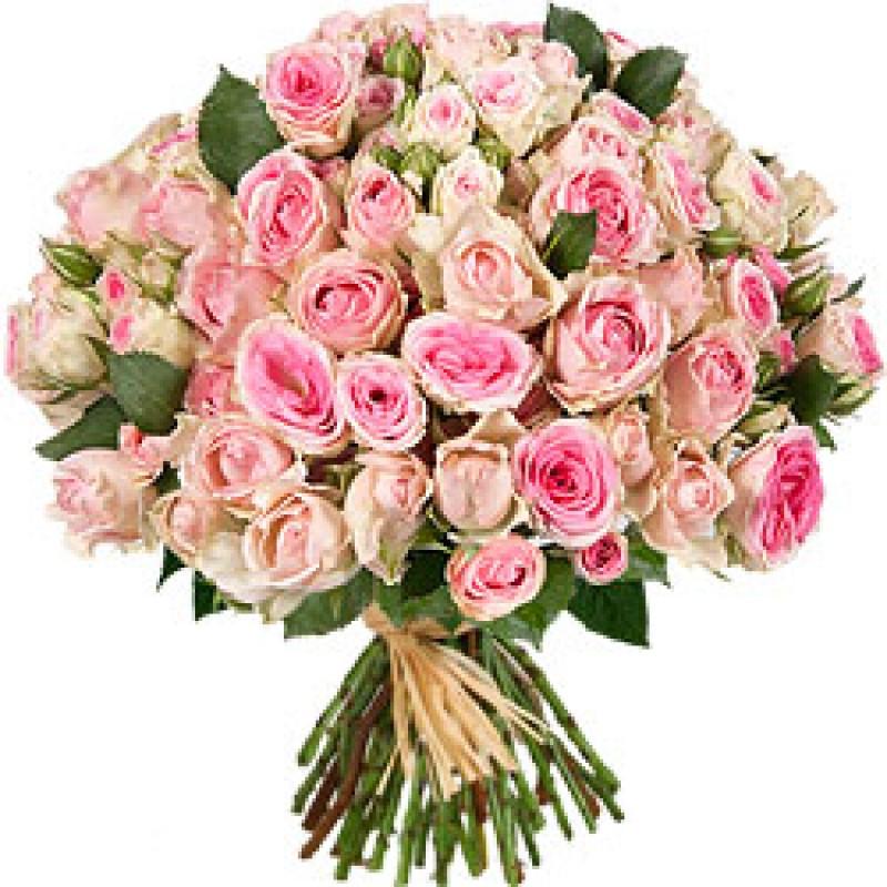 Pretty In Pink EB-447