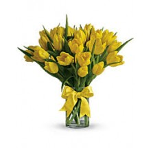 20 yellow tulips EB-293