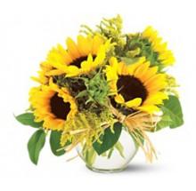 sun flower delight EB-552