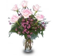 6 light Pink Roses EB-238