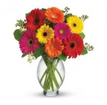 Blooming Gerbera EB-390