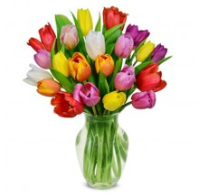 20 Mix Color Tulips,Think Spring  EB-482
