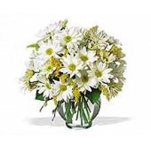 white daisy bowl EB-324