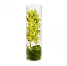 Winding Orchid  EB-468
