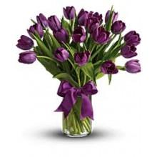 20 purple tulips EB-291