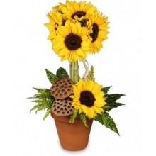 Sun flower toparie EB-557