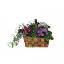 African violet planter EB-524
