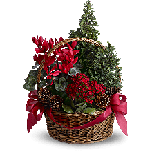 Christmas bloomers EB-185