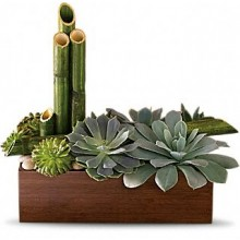 Succulent Garden EB-457