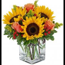 Sunflower Blooms EB-162