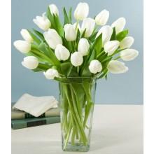EB-638 White Tulips